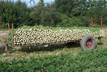 celeris branche
