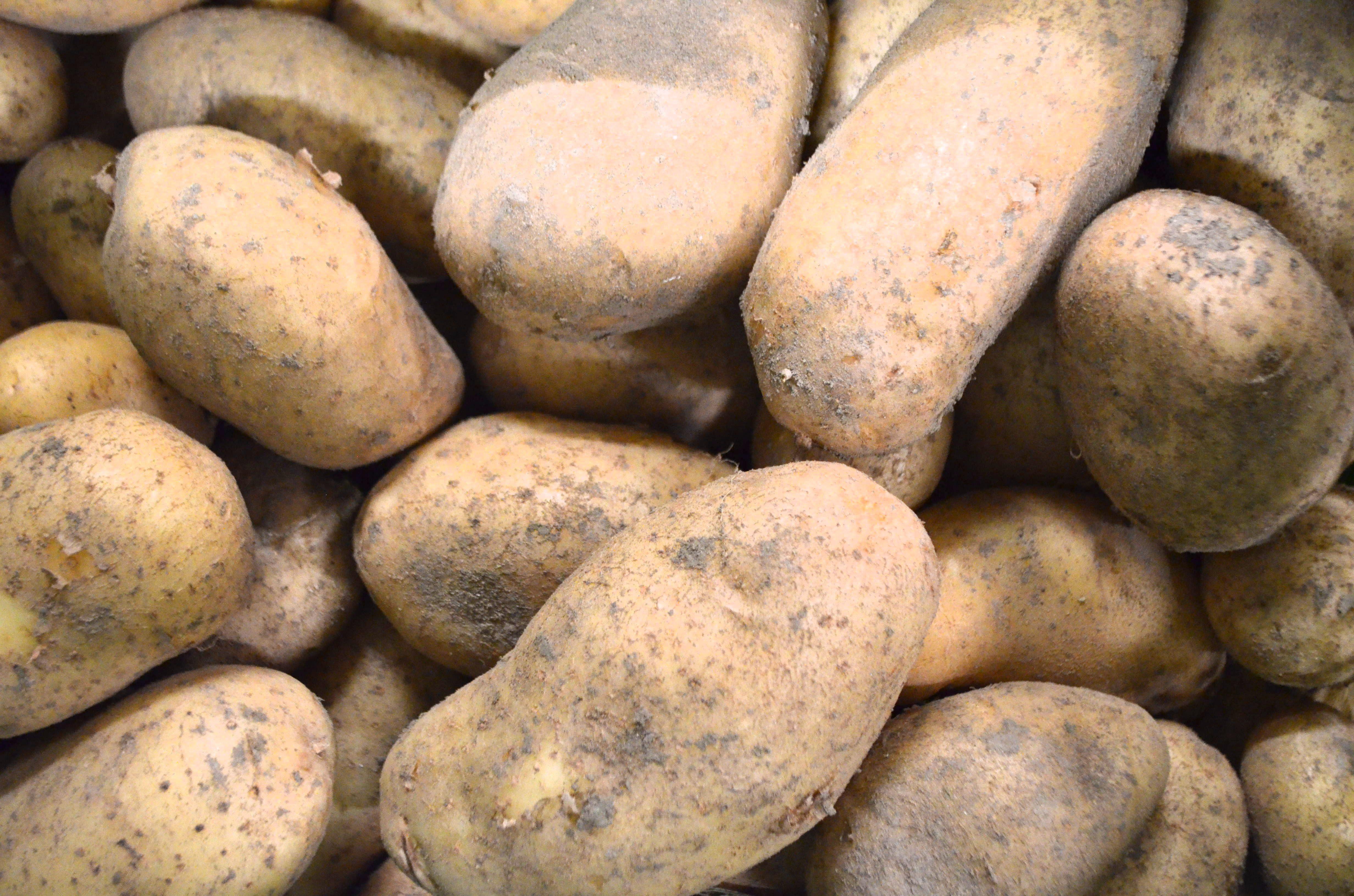 ecras de pommes de terre l 39 huile d 39 olive et au thym ferme pulverm hle. Black Bedroom Furniture Sets. Home Design Ideas