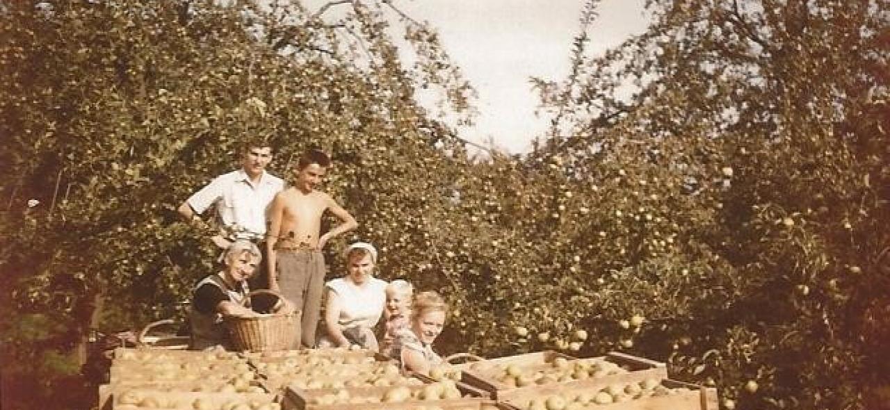 Récolte de reine des reinettes en 1958 avec Mathilde et Dany