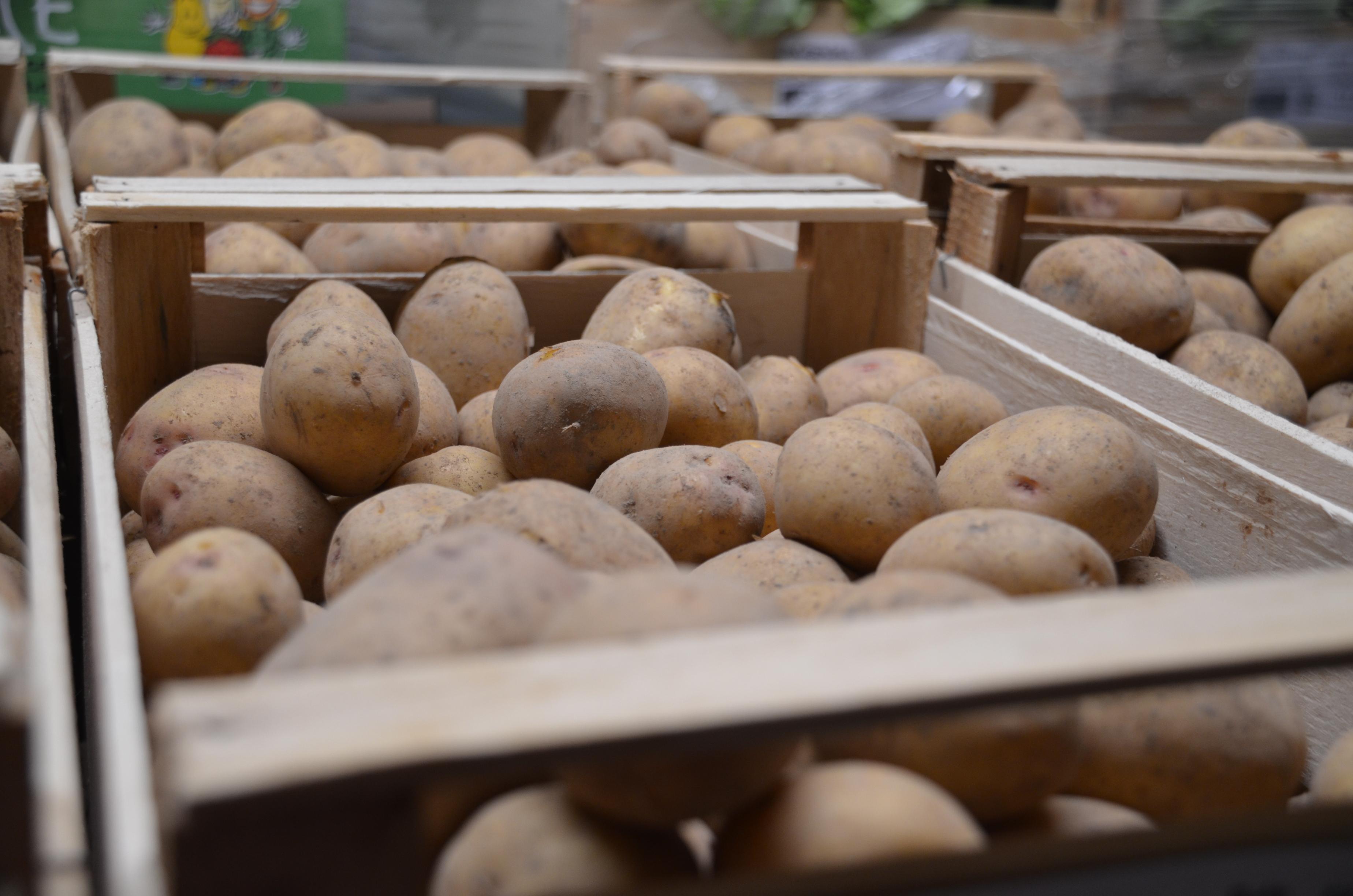 les pommes de terre nouvelles