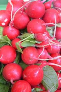 Le radis rose rond bio
