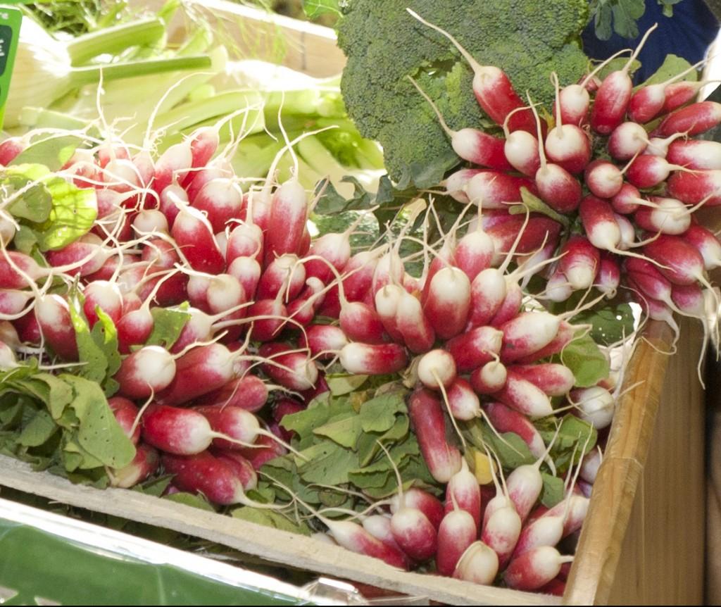 Le radis rose à bout blanc